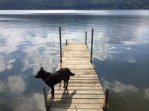 Bailey at Canandaigua Lake