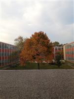East High courtyard in Fall