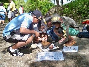 Students Identifying Macro-invertebrates
